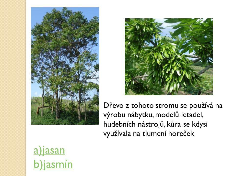 Dřevo z tohoto stromu se používá na výrobu nábytku, modelů letadel, hudebních nástrojů, kůra se kdysi využívala na tlumení horeček a)jasan b)jasmín