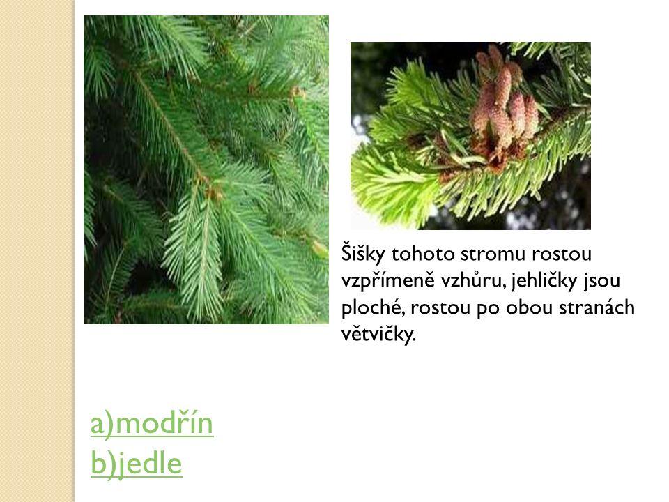 Šišky tohoto stromu rostou vzpřímeně vzhůru, jehličky jsou ploché, rostou po obou stranách větvičky. a)modřín b)jedle