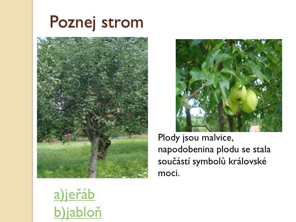 Poznej strom Plody jsou malvice, napodobenina plodu se stala součástí symbolů královské moci. a)jeřáb b)jabloň
