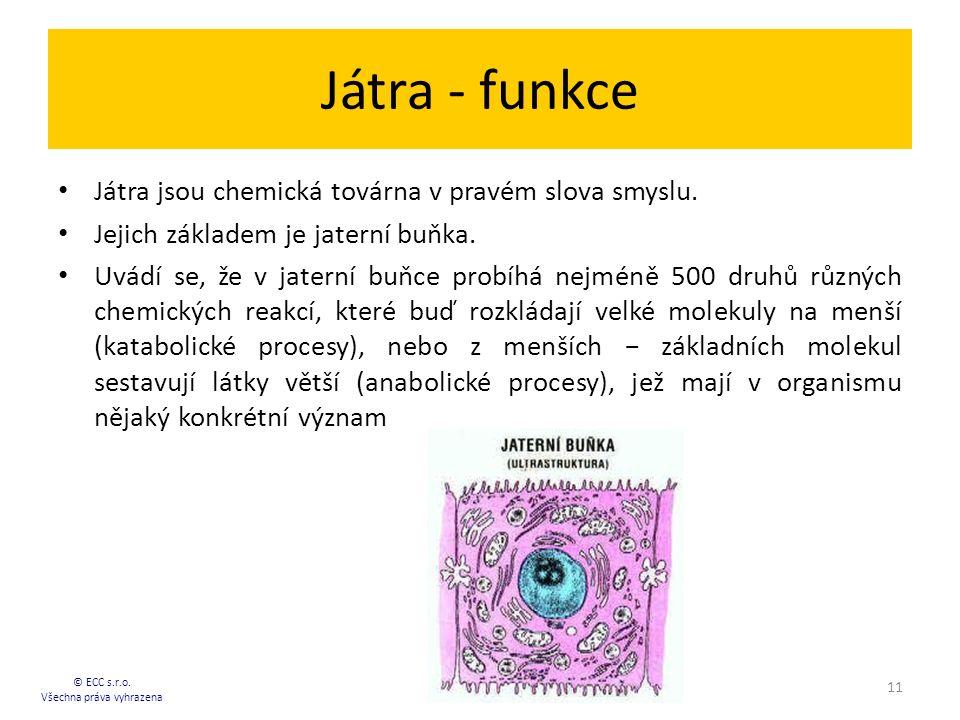 Játra - funkce Játra jsou chemická továrna v pravém slova smyslu. Jejich základem je jaterní buňka. Uvádí se, že v jaterní buňce probíhá nejméně 500 d