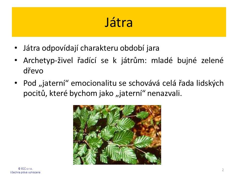 Hlavní funkce jater: Metabolismus aminokyselin.