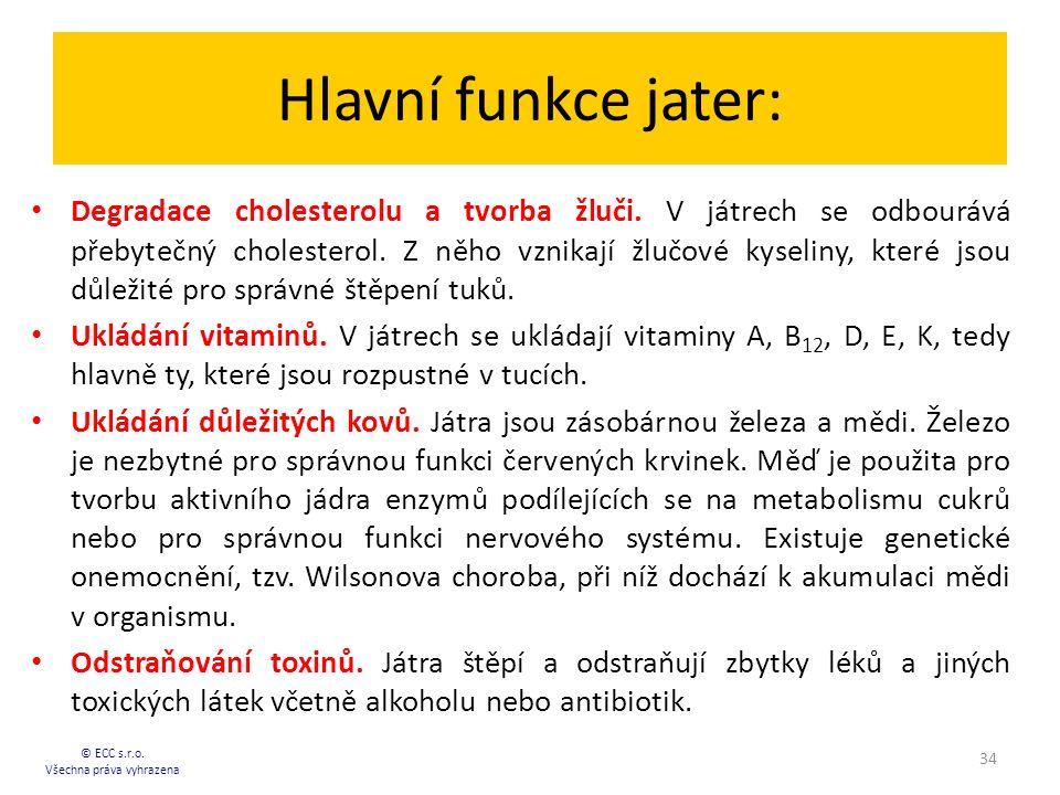 Hlavní funkce jater: Degradace cholesterolu a tvorba žluči. V játrech se odbourává přebytečný cholesterol. Z něho vznikají žlučové kyseliny, které jso