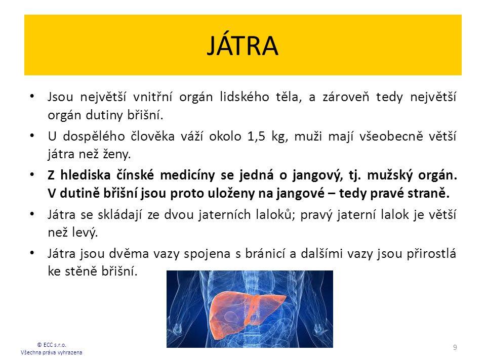 JÁTRA Jsou největší vnitřní orgán lidského těla, a zároveň tedy největší orgán dutiny břišní.