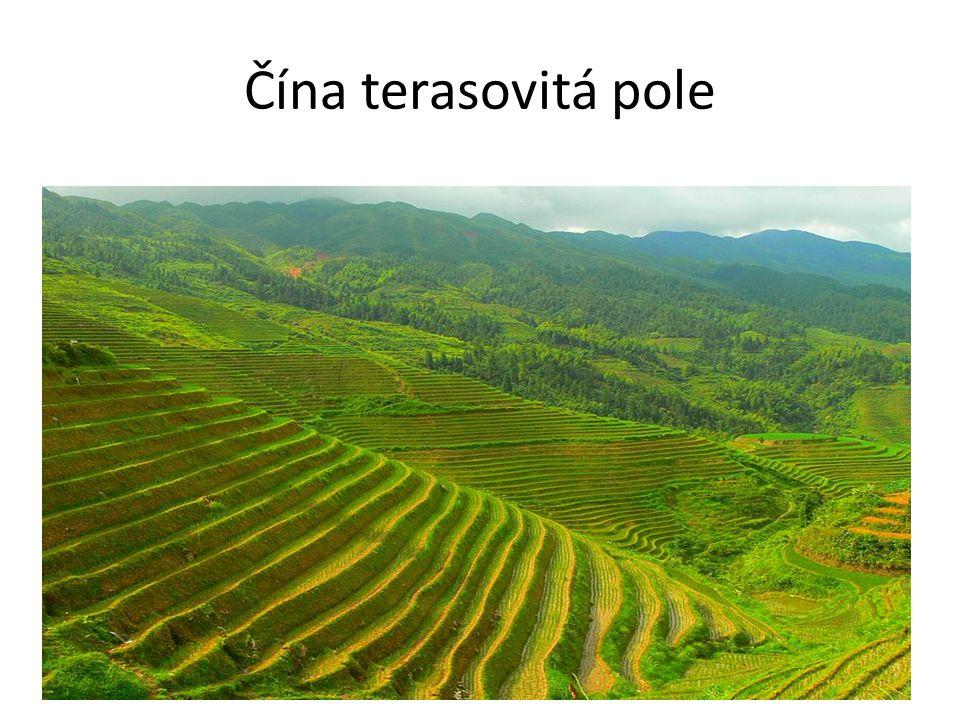 Čína terasovitá pole
