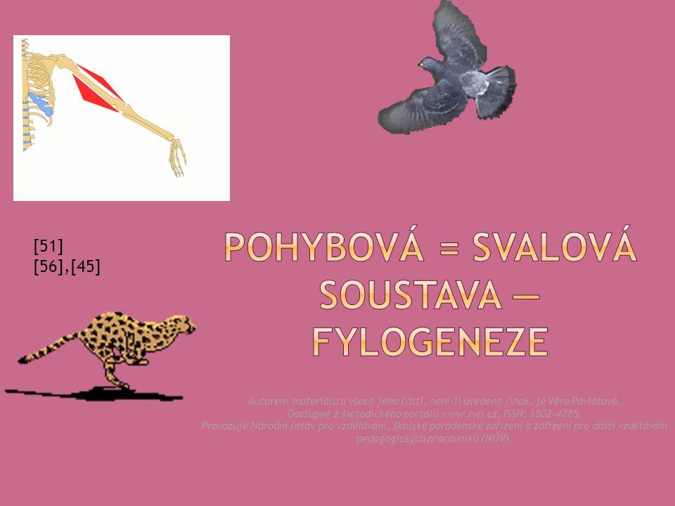 hladká svalovina — útrobní svalstvo (dýchací trubice, plíce, trávicí trubice, …), svalovina cév, svalovina žaberní oblasti  kosterní svalovina — příčně pruhovaná, u původně vodních obratlovců existoval mohutný boční sval, ten se během vývoje rozpadl na velký počet samostatných svalů; s přechodem na souš — rozvoj a diferenciace svalů pohybujících volnými končetinami.
