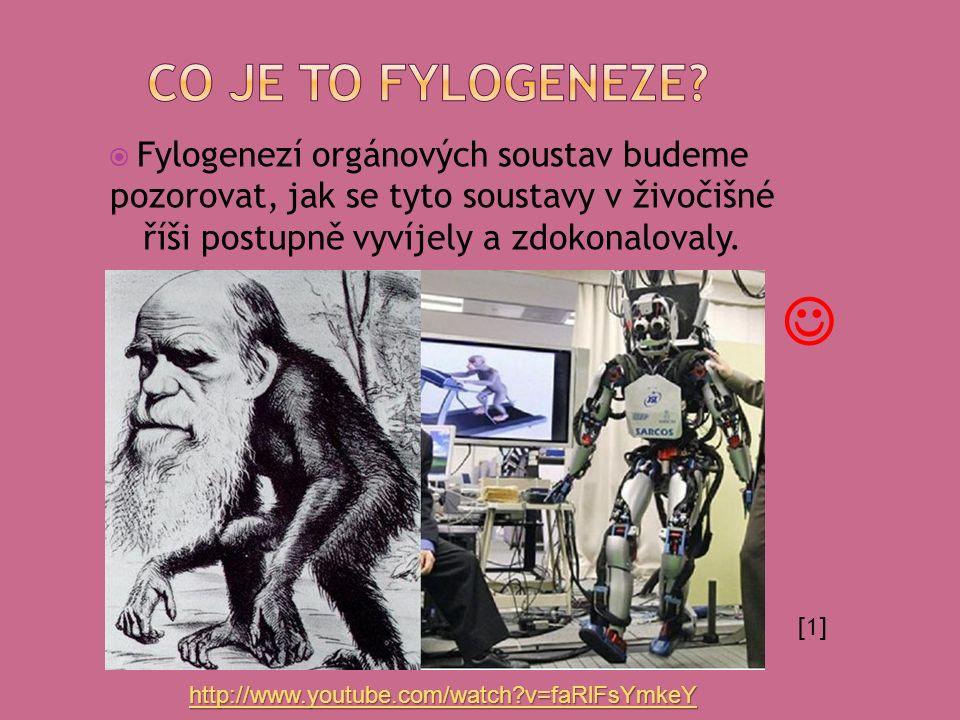  Fylogenezí orgánových soustav budeme pozorovat, jak se tyto soustavy v živočišné říši postupně vyvíjely a zdokonalovaly. [1] http://www.youtube.com/