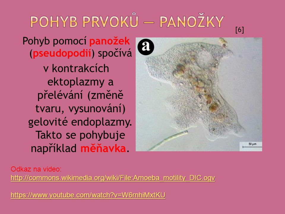 1.FLAGELLUM 2. PANOŽKY 3. UNDULUJÍCÍ MEMB. 4. STAŽITELNÁ STOPKA 5.