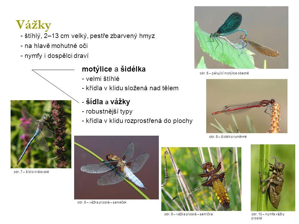 Vážky - štíhlý, 2–13 cm velký, pestře zbarvený hmyz - na hlavě mohutné oči - nymfy i dospělci draví motýlice a šidélka - velmi štíhlé - křídla v klidu složená nad tělem - šídla a vážky - robustnější typy - křídla v klidu rozprostřená do plochy obr.