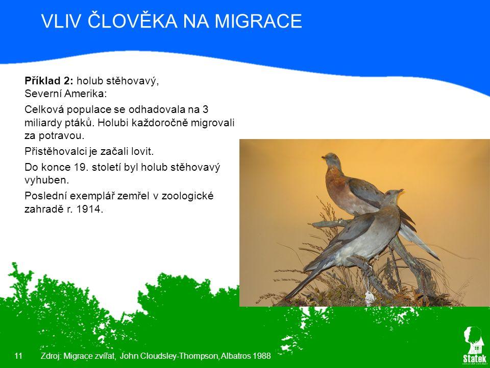 11 VLIV ČLOVĚKA NA MIGRACE Příklad 2: holub stěhovavý, Severní Amerika: Celková populace se odhadovala na 3 miliardy ptáků. Holubi každoročně migroval