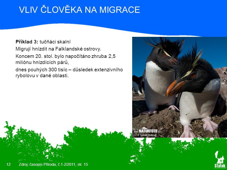 12 VLIV ČLOVĚKA NA MIGRACE Příklad 3: tučňáci skalní Migrují hnízdit na Falklandské ostrovy. Koncem 20. stol. bylo napočítáno zhruba 2,5 miliónu hnízd