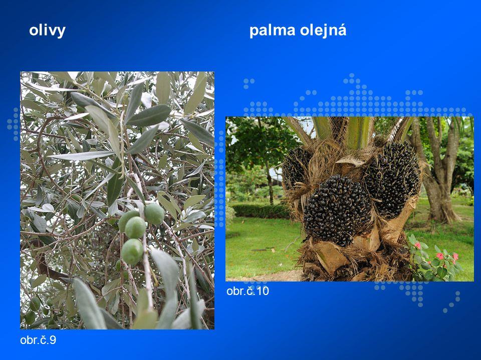 olivypalma olejná obr.č.9 obr.č.10