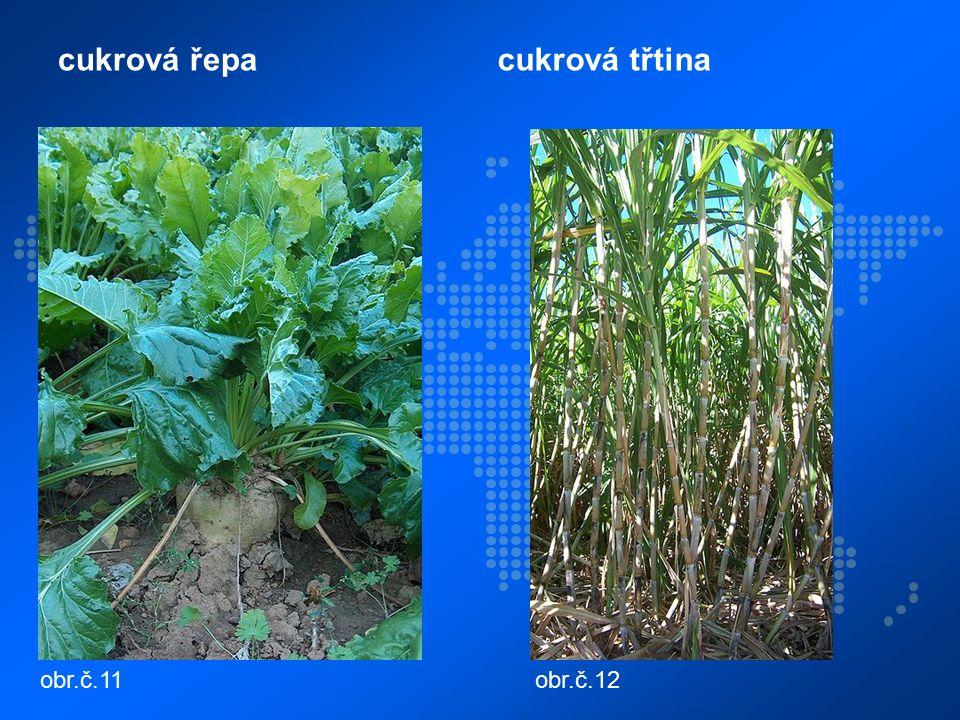 cukrová řepacukrová třtina obr.č.11obr.č.12