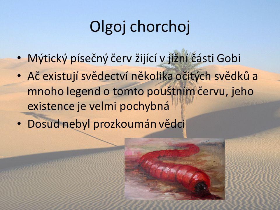 Olgoj chorchoj Mýtický písečný červ žijící v jížní části Gobi Ač existují svědectví několika očitých svědků a mnoho legend o tomto pouštním červu, jeh