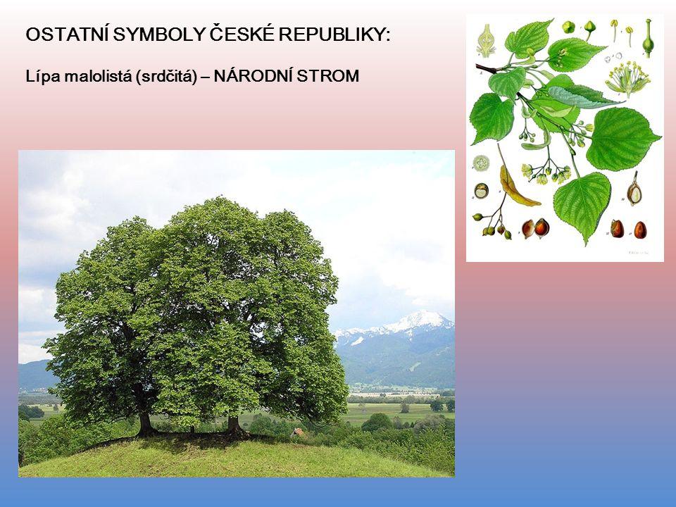OSTATNÍ SYMBOLY ČESKÉ REPUBLIKY: Lípa malolistá (srdčitá) – NÁRODNÍ STROM