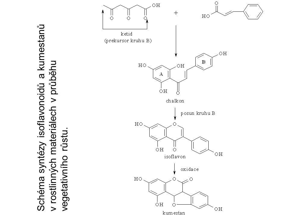 Schéma syntézy isoflavonoidů a kumestanů v rostlinných materiálech v průběhu vegetativního růstu.