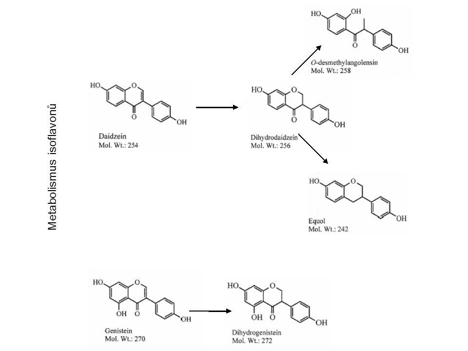Metabolismus isoflavonů