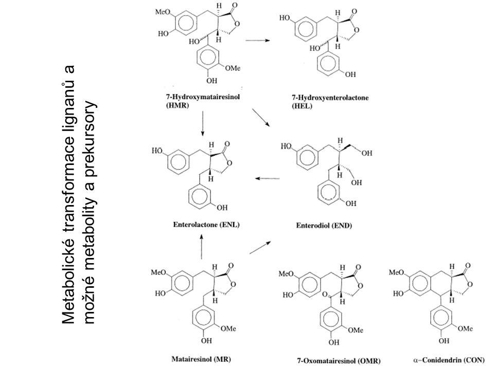 Metabolické transformace lignanů a možné metabolity a prekursory