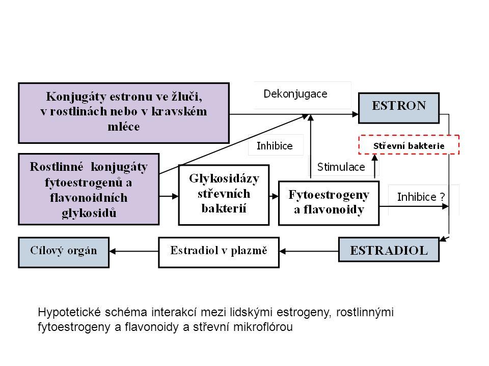 Hypotetické schéma interakcí mezi lidskými estrogeny, rostlinnými fytoestrogeny a flavonoidy a střevní mikroflórou