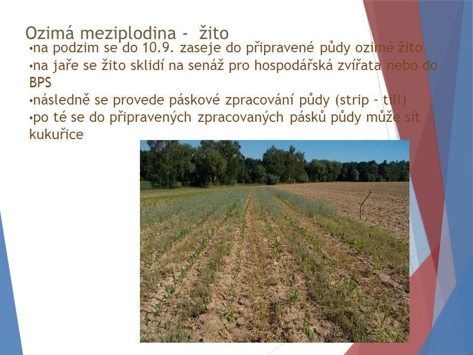 Ozimá meziplodina - žito na podzim se do 10.9.