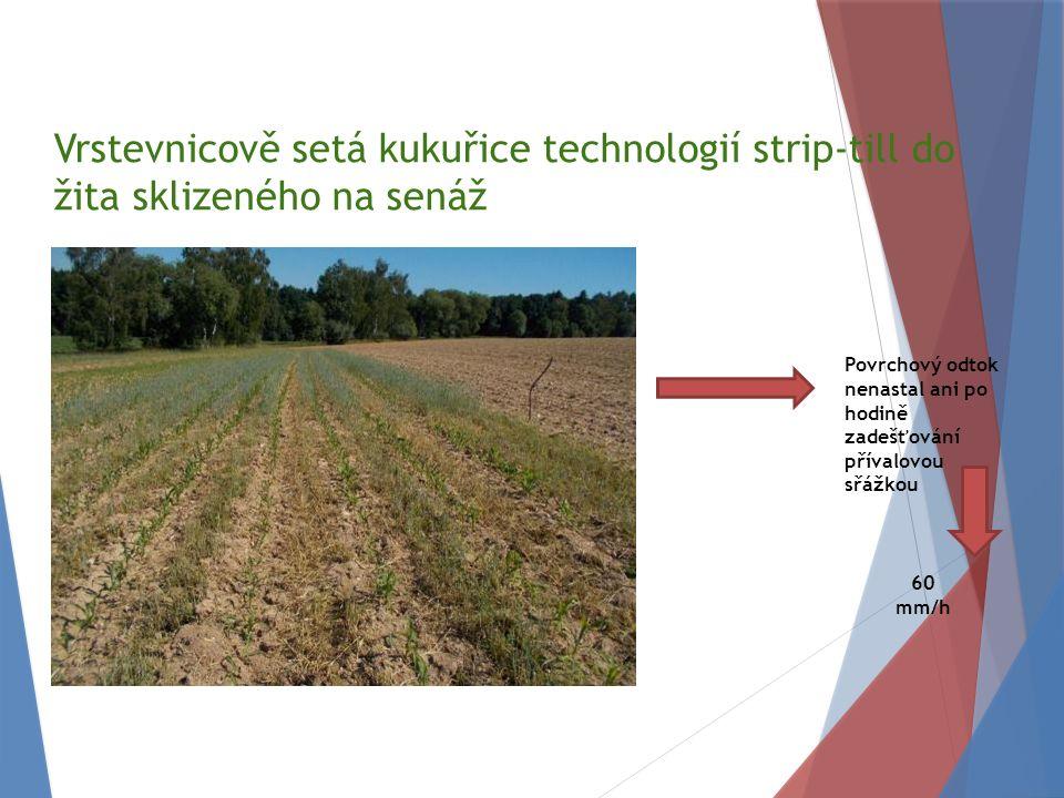 Vrstevnicově setá kukuřice technologií strip-till do žita sklizeného na senáž Povrchový odtok nenastal ani po hodině zadešťování přívalovou sřážkou 60 mm/h