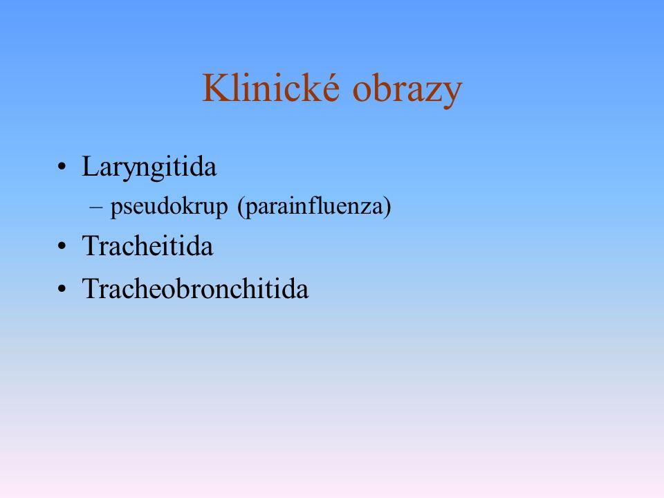 Klinické obrazy Laryngitida –pseudokrup (parainfluenza) Tracheitida Tracheobronchitida