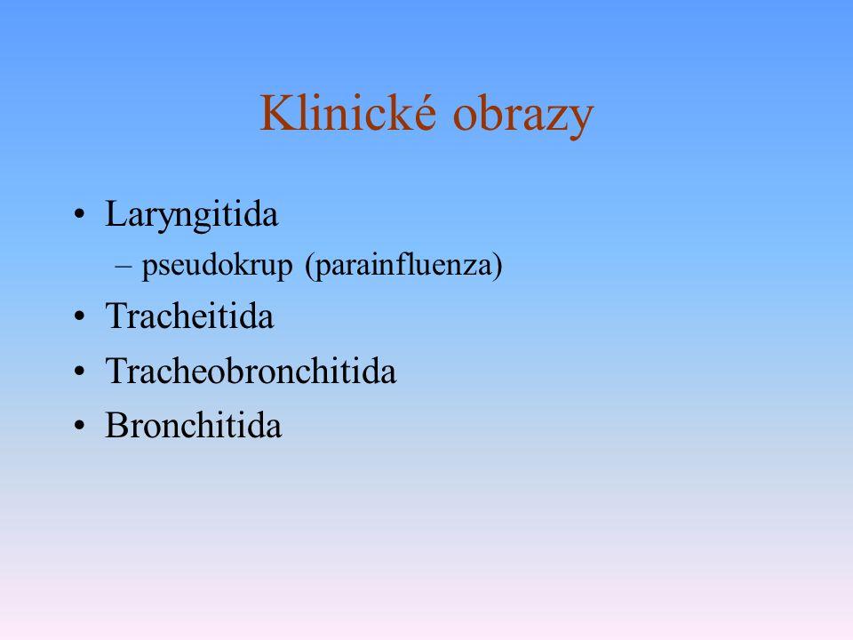 Klinické obrazy Laryngitida –pseudokrup (parainfluenza) Tracheitida Tracheobronchitida Bronchitida