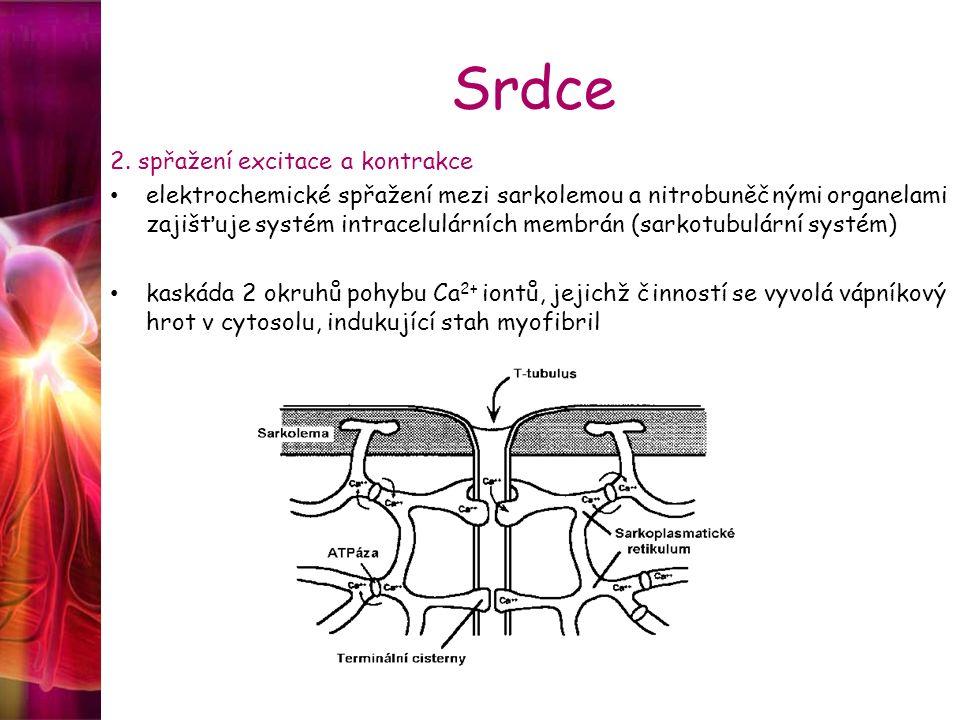 Srdce 2. spřažení excitace a kontrakce elektrochemické spřažení mezi sarkolemou a nitrobuněčnými organelami zajišťuje systém intracelulárních membrán