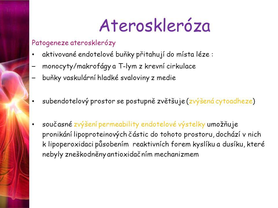 Ateroskleróza Patogeneze aterosklerózy aktivované endotelové buňky přitahují do místa léze : – monocyty/makrofágy a T-lym z krevní cirkulace – buňky v
