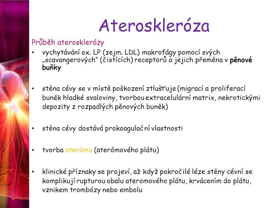 """Ateroskleróza Průběh aterosklerózy vychytávání ox. LP (zejm. LDL) makrofágy pomocí svých """"scavangerových"""" (čistících) receptorů a jejich přeměna v pěn"""