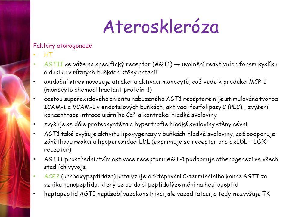 Ateroskleróza Faktory aterogeneze HT AGTII se váže na specifický receptor (AGT1) → uvolnění reaktivních forem kyslíku a dusíku v různých buňkách stěny