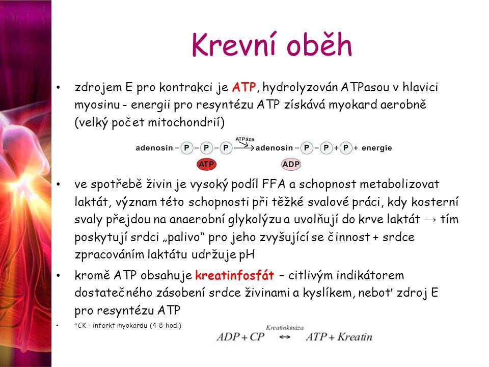 Krevní oběh zdrojem E pro kontrakci je ATP, hydrolyzován ATPasou v hlavici myosinu - energii pro resyntézu ATP získává myokard aerobně (velký počet mi