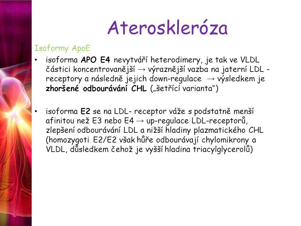 Ateroskleróza Isoformy ApoE isoforma APO E4 nevytváří heterodimery, je tak ve VLDL částici koncentrovanější → výraznější vazba na jaterní LDL - recept