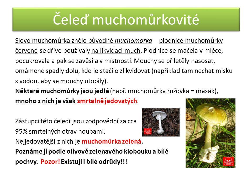 Čeleď muchomůrkovité Slovo muchomůrka znělo původně muchomorka - plodnice muchomůrky červené se dříve používaly na likvidaci much. Plodnice se máčela