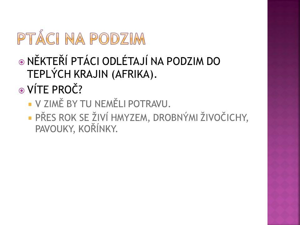  NĚKTEŘÍ PTÁCI ODLÉTAJÍ NA PODZIM DO TEPLÝCH KRAJIN (AFRIKA).