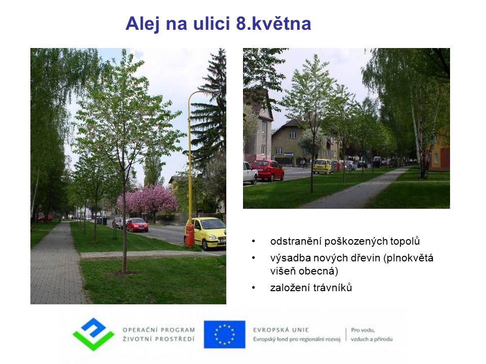Alej na ulici 8.května odstranění poškozených topolů výsadba nových dřevin (plnokvětá višeň obecná) založení trávníků