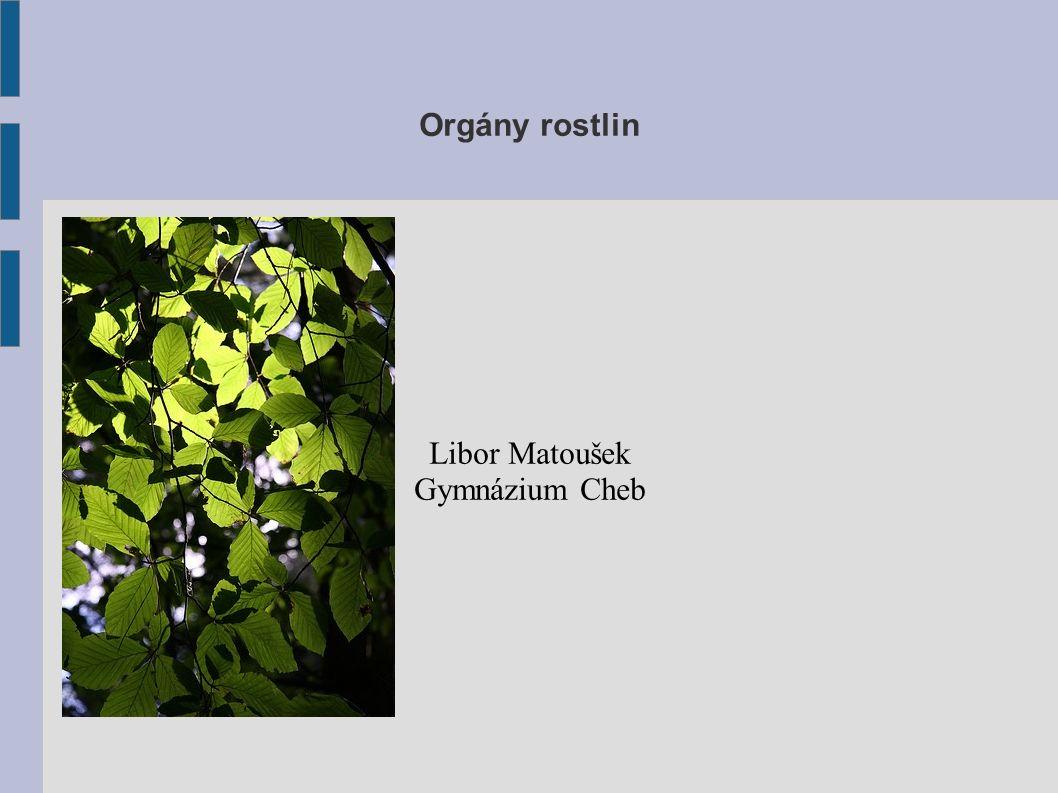 Základní rozdělení VEGETATIVNÍ orgány (V) růst, nepohlavní části (2n chromozomů) kořen stonek list GENERATIVNÍ orgány (G) pohlavní rozmnožování rostlin květkvět / květenstvíkvětenství plod