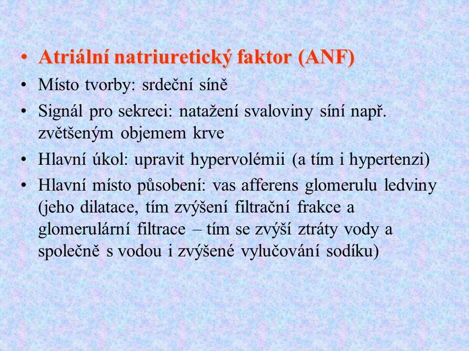 Atriální natriuretický faktor (ANF)Atriální natriuretický faktor (ANF) Místo tvorby: srdeční síně Signál pro sekreci: natažení svaloviny síní např.