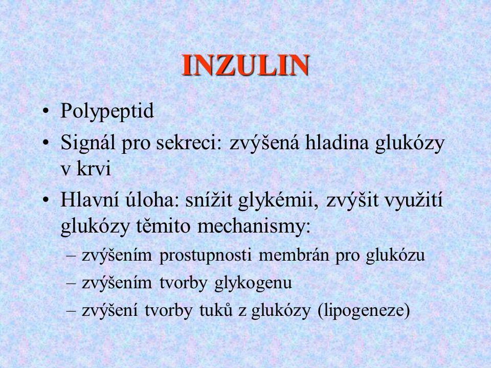 INZULIN Polypeptid Signál pro sekreci: zvýšená hladina glukózy v krvi Hlavní úloha: snížit glykémii, zvýšit využití glukózy těmito mechanismy: –zvýšen