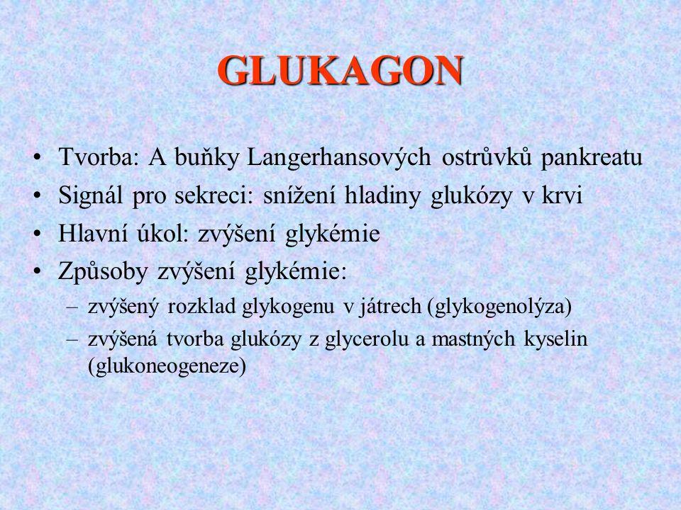 GLUKAGON Tvorba: A buňky Langerhansových ostrůvků pankreatu Signál pro sekreci: snížení hladiny glukózy v krvi Hlavní úkol: zvýšení glykémie Způsoby zvýšení glykémie: –zvýšený rozklad glykogenu v játrech (glykogenolýza) –zvýšená tvorba glukózy z glycerolu a mastných kyselin (glukoneogeneze)
