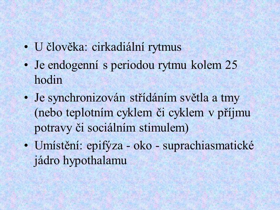 U člověka: cirkadiální rytmus Je endogenní s periodou rytmu kolem 25 hodin Je synchronizován střídáním světla a tmy (nebo teplotním cyklem či cyklem v příjmu potravy či sociálním stimulem) Umístění: epifýza - oko - suprachiasmatické jádro hypothalamu