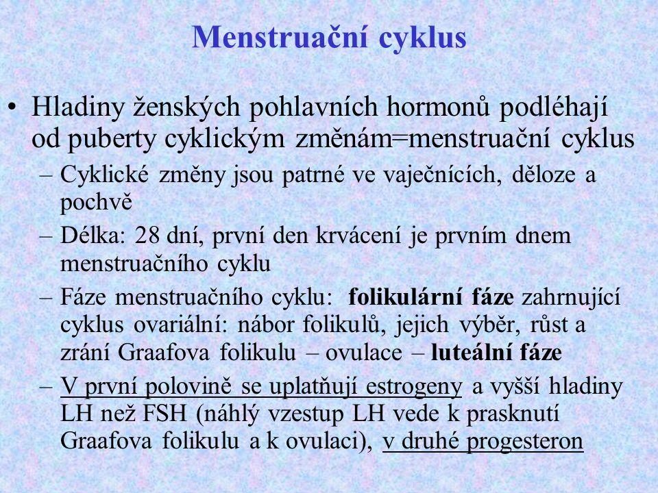 Menstruační cyklus Hladiny ženských pohlavních hormonů podléhají od puberty cyklickým změnám=menstruační cyklus –Cyklické změny jsou patrné ve vaječnících, děloze a pochvě –Délka: 28 dní, první den krvácení je prvním dnem menstruačního cyklu –Fáze menstruačního cyklu: folikulární fáze zahrnující cyklus ovariální: nábor folikulů, jejich výběr, růst a zrání Graafova folikulu – ovulace – luteální fáze –V první polovině se uplatňují estrogeny a vyšší hladiny LH než FSH (náhlý vzestup LH vede k prasknutí Graafova folikulu a k ovulaci), v druhé progesteron