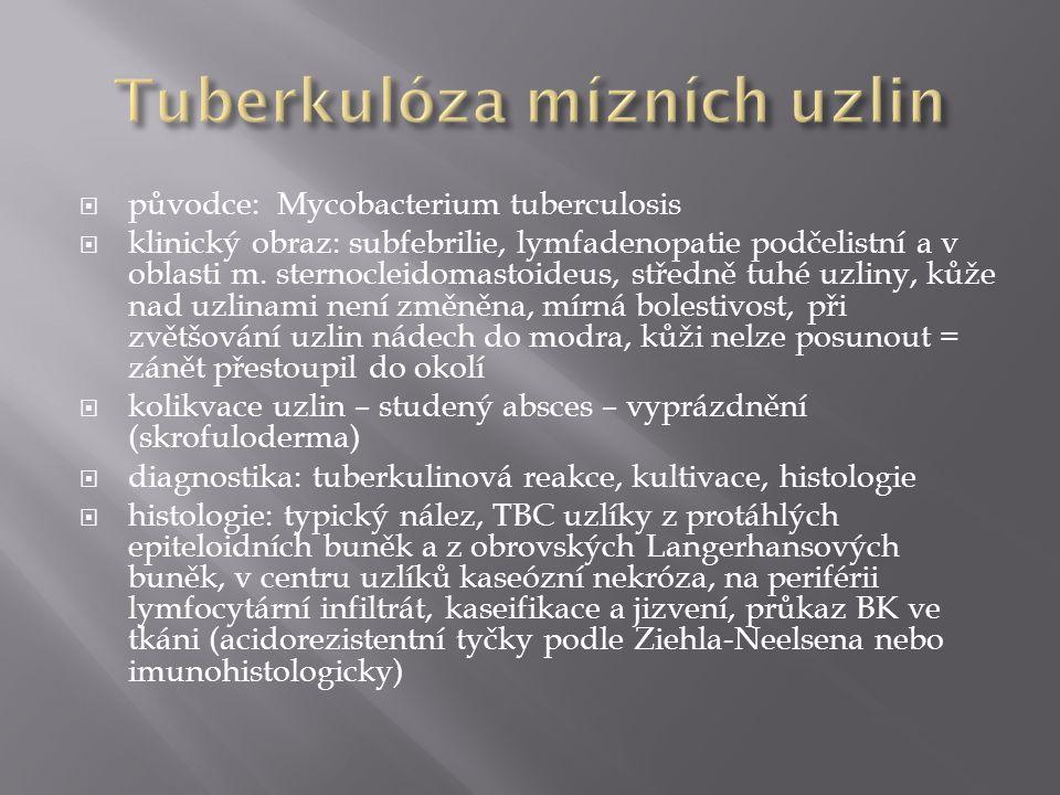  původce: Mycobacterium tuberculosis  klinický obraz: subfebrilie, lymfadenopatie podčelistní a v oblasti m. sternocleidomastoideus, středně tuhé uz