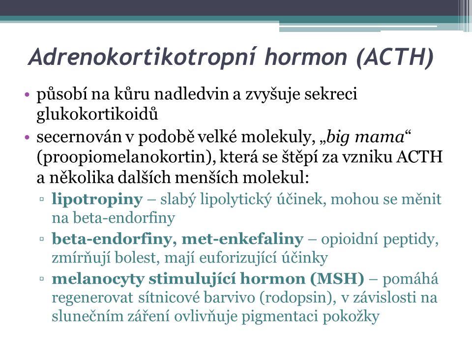 Tyreotropní hormon (TSH) též tyreoideu stimulující hormon řídí tvorbu a sekreci hormonů štítné žlázy