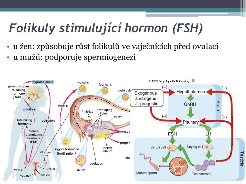 Luteinizační hormon (LH) stimuluje sekreci pohlavních hormonů u ženy: stimuluje ovaria k produkci estrogenů, vyvolává ovulaci (ve folikulární fázi prudký vzestup LH) u muže: váže se na receptory Leydigových buněk a stimuluje sekreci testosteronu