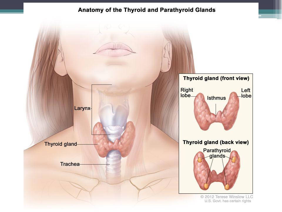 Poruchy sekrece obecný příznak poruchy – vzniká struma (vole) hypertyreóza – např.