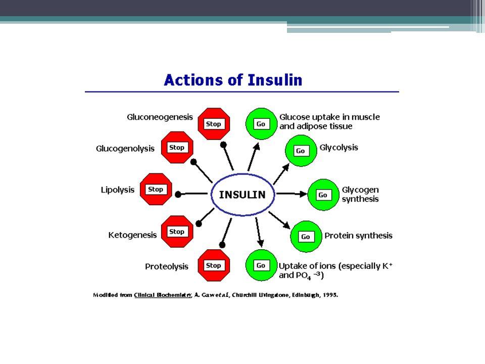 Hypoglykémie a hyperglykémie hypoglykémie při zvýšené sekreci inzulínu, příznaky: ▫zvýšený příjem potravy (při dlouhodobé lehké hypoglykémii se postupně vyvíjí obezita) ▫ovlivnění CNS (zmatenost, slabost, ospalost, závratě, bezvědomí) ▫celkový metabolický rozvrat a snaha organismu o kompenzaci (třes, pocení, bledost - vliv aktivace parasympatiku) hyperglykémie při snížené sekreci, vede k diabetes mellitus (úplavice cukrová), příčina: ▫nedostatečná produkce inzulínu (IDDM, insulin-dependent) ▫necitlivost tkání na inzulín (NIDDM, non-insulin-dependent) příznaky: ▫glykosurie, polyurie a žíznivost (glukóza je osmoticky aktivní) ▫snížení utilizace glukózy, což vede i k poruše metabolismu tuků (zvýšené odbourávání, vznik ketolátek, porušení acidobazické rovnováhy) a bílkovin (zhoršené hojení ran)