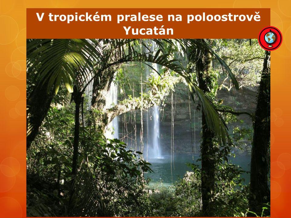 V tropickém pralese na poloostrově Yucatán