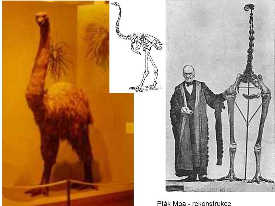 Pták Moa - rekonstrukce