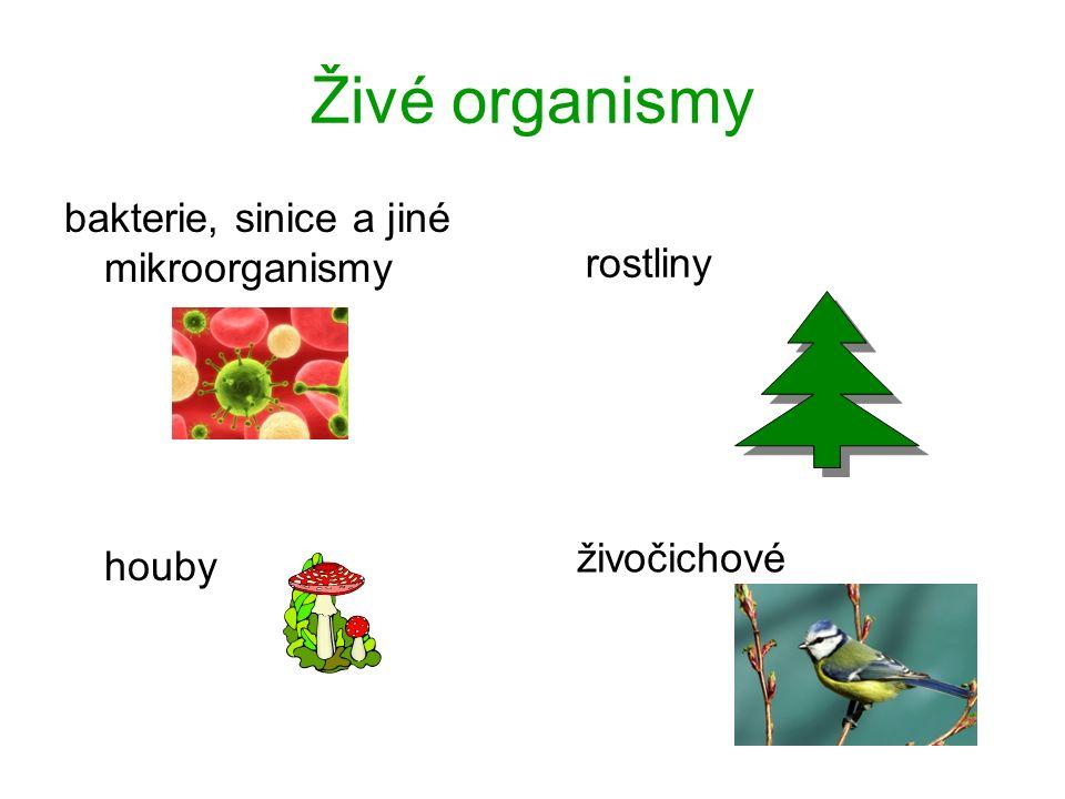 Živé organismy bakterie, sinice a jiné mikroorganismy houby rostliny živočichové
