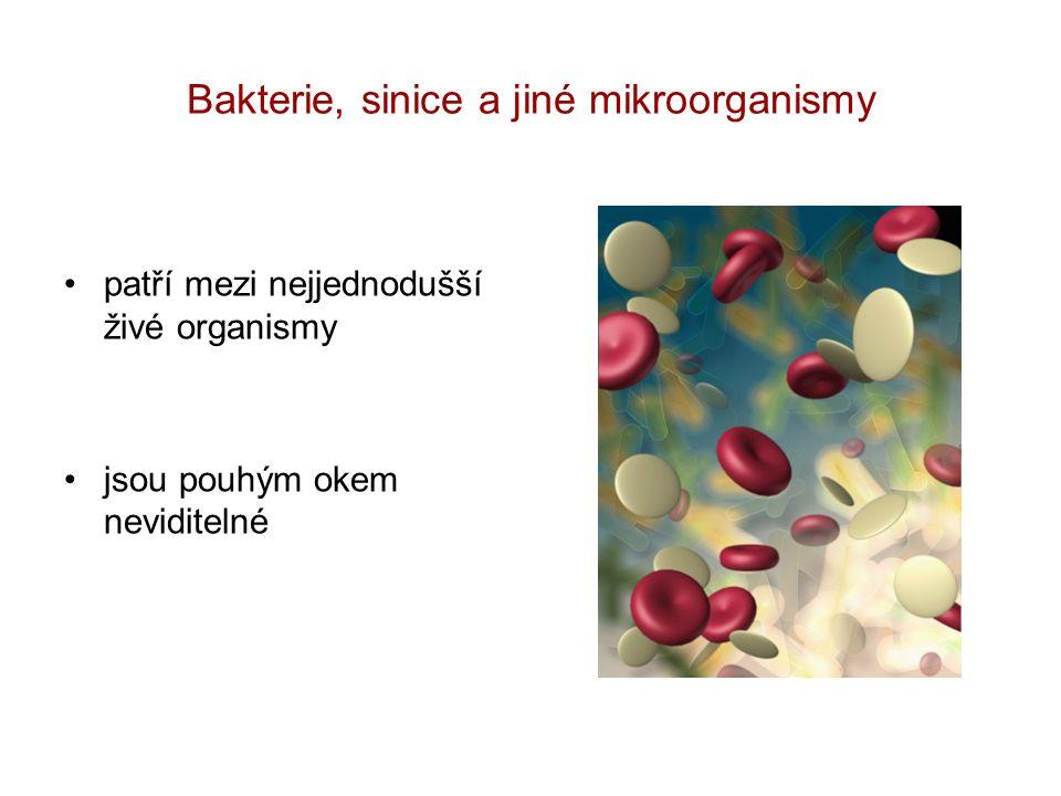 Bakterie, sinice a jiné mikroorganismy patří mezi nejjednodušší živé organismy jsou pouhým okem neviditelné